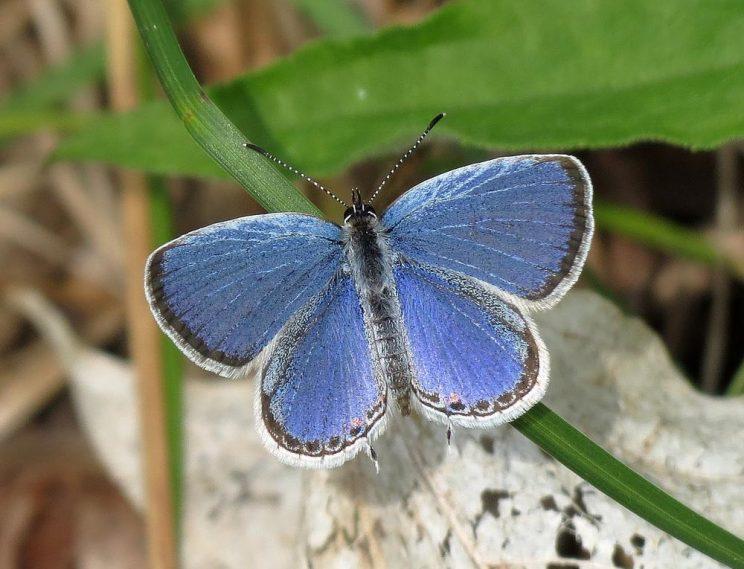 Butterflies of High Park