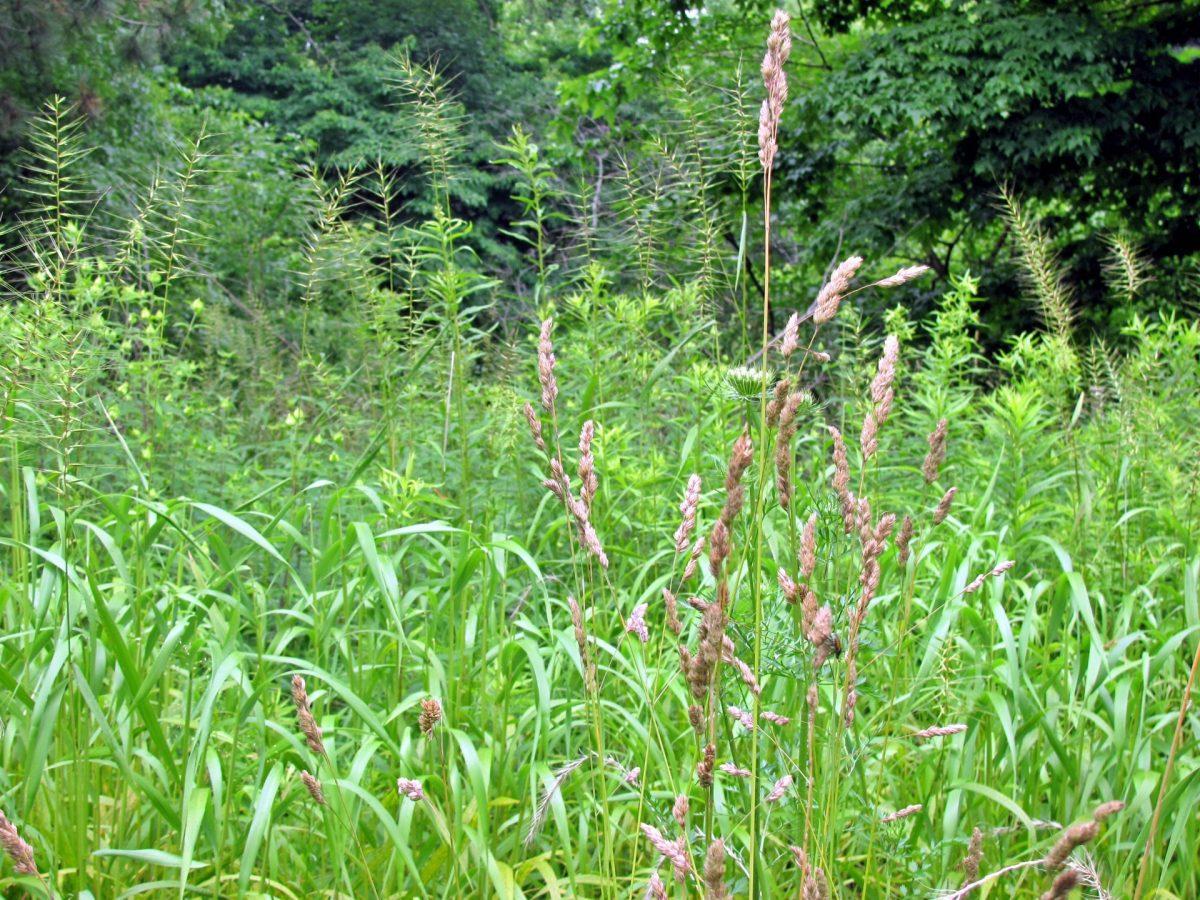 Grasses. Photo: Sharon Lovett