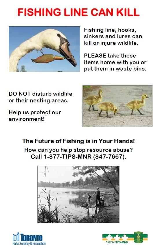Fishing line can kill