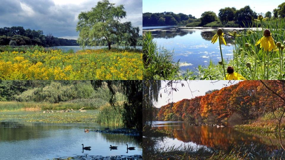 Views of Grenadier Pond. Photo: David Stoneleigh