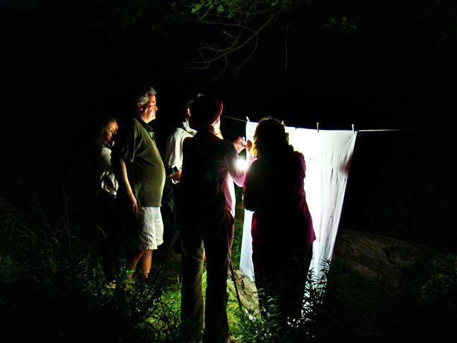 High Park Moth Night 2011. Photo: Karen Abel