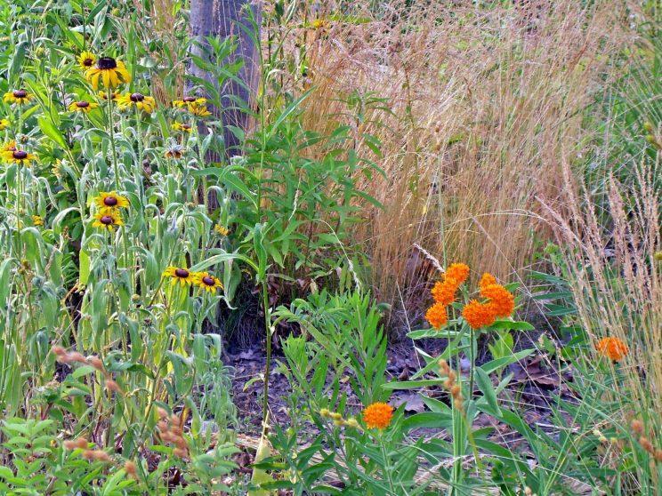 Savannah Plants. Photo: Sharon Lovett