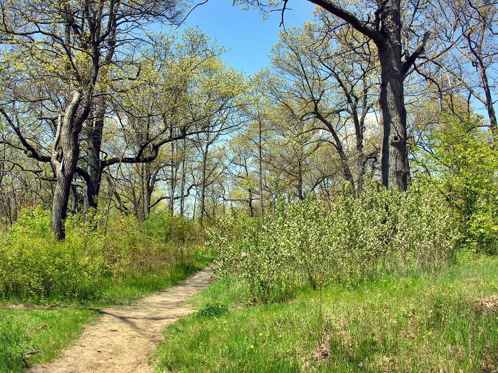 Trail in Black Oak Woodland. Photo:  James Kamstra