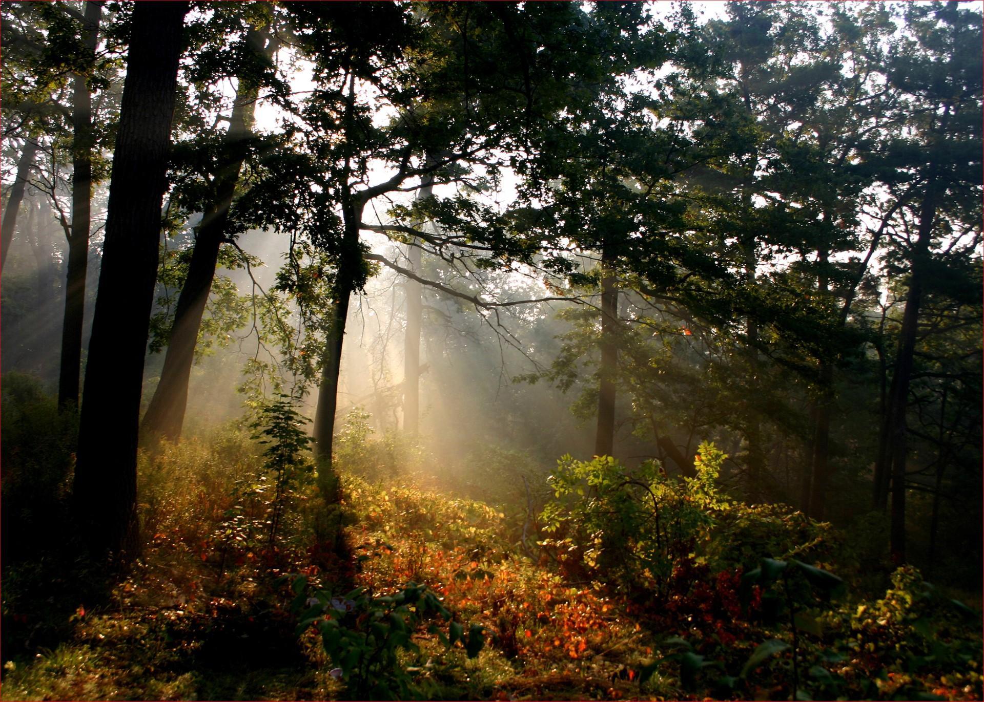 Sunlight in the Woods. Photo: David Allen