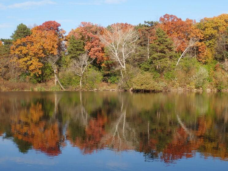 Lower Duck Pond east side in autumn. Photo: Karen Yukich