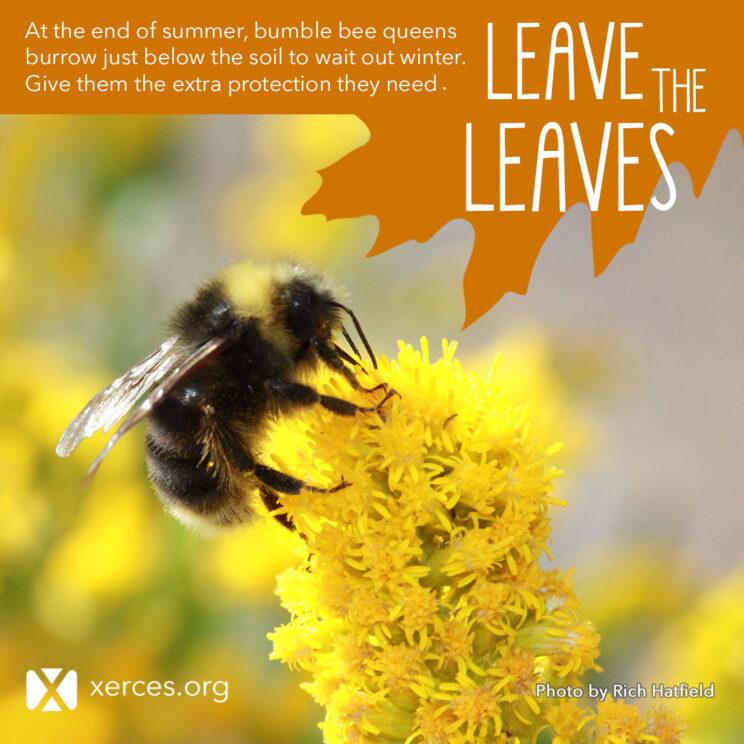 Leave the Leaves Bumble Bee