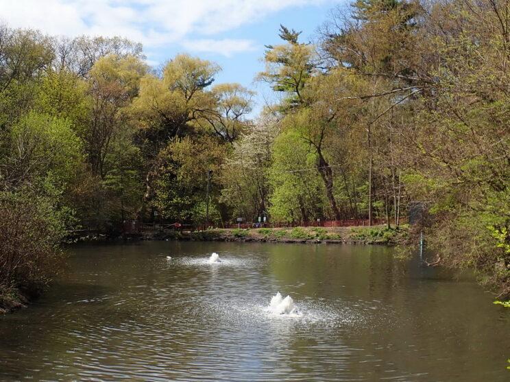 Ridout Pond with aerator. 2021. Photo: Karen Yukich