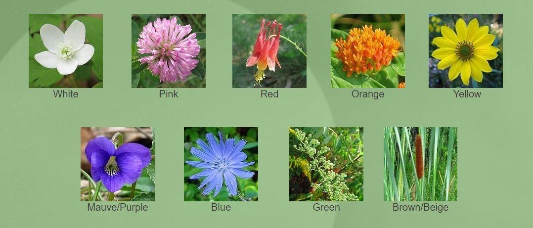 High Park Wildflowers website screenshot