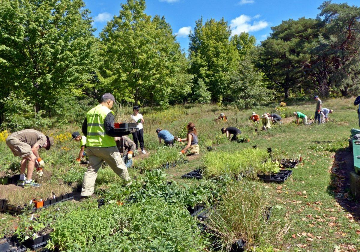 2016-High-Park-Stewards_Work_with_Plants_117-e