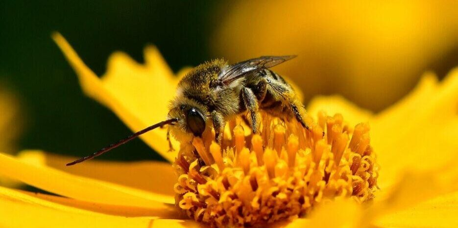 Bee on the flower. Photo: JM